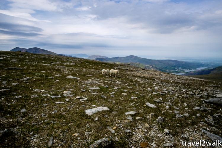 18_5_Wales-1453.jpg