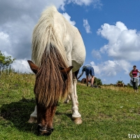 virginia hikes: Grayson Highlands loop, July 27 2019
