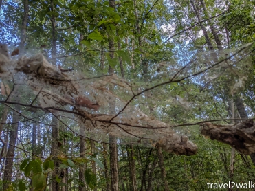 many spiderwebs on the trail