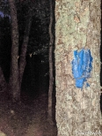 you'll know you are on the correct trail if you see blue blazes