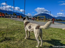 doggos everywhere typical of a South America town