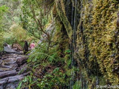 water cascading off the moss and spilling onto the trail on our way back