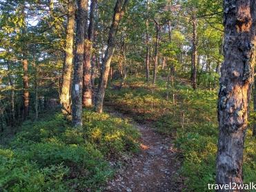 2020 on the ridge of Tinker Mountain