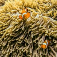 trip report: Australia - diving the Great Barrier Reef, December 2019